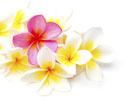 Fleurs exotiques symbolisant les soins polynésiens Clairjoie